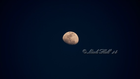 moon_wm